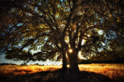 Tree of Thrive This is one of several shots I was asked to do for a book cover. It's a book about Thriving. I think this one has become personal icon for Thrive. Every time I look at it, I'm reminded to follow my muse... the light... that 'spark of divine inspiration'- that guides my life to its inspired happiest, funnest, most fulfilled ... most THRIVING version of itself. Whatever that brings. Don't think... just leap.   ©Karen Hutton - Creative Commons (CC BY-NC 3.0)