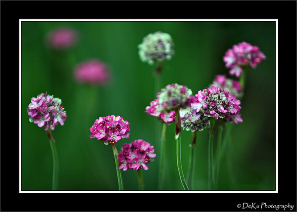 Close-up of tiny pink flowers