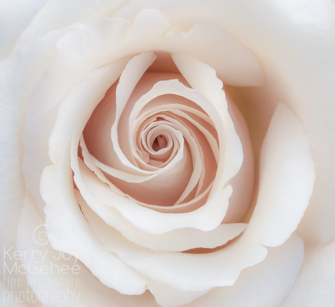 Mother's White Rose