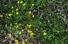 Small desert wildflowers.