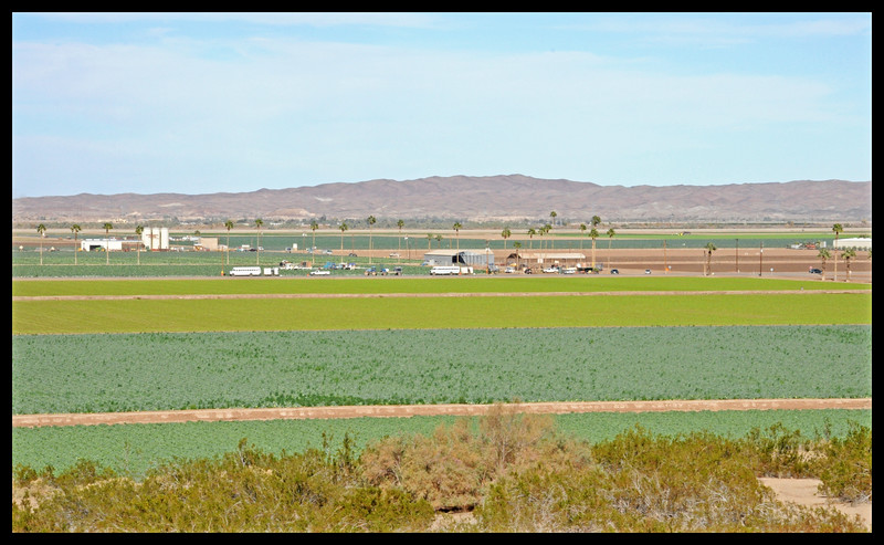 Vegetable Fields