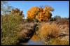 Fall Trees along an Irrigation Ditch