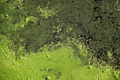 Flowing Green Columbia, MD, US