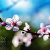 Plum Blossom Branch