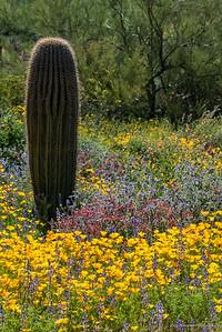 A blanket of wildflowers