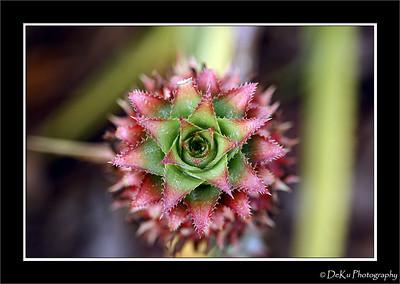 Pinapple at the Dole Plantation