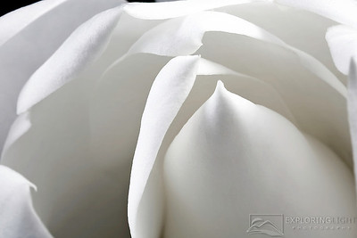 """BLOOMING MAGNOLIA""© Chris Moore - Exploring Light PhotographyPURCHASE A PRINT"