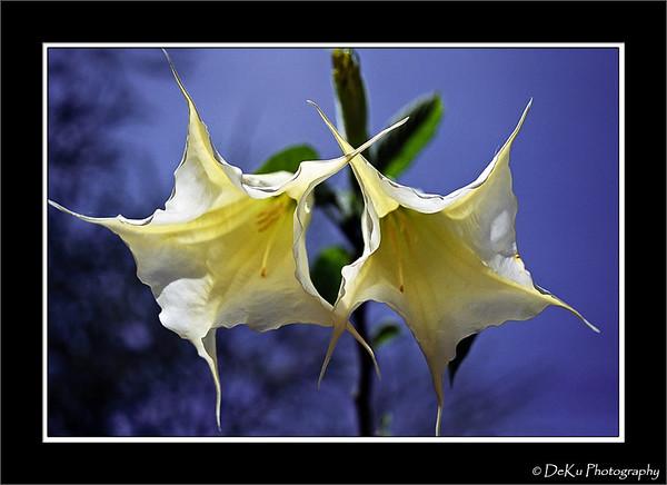 Twin flowers taken in Nakuru, Kenya