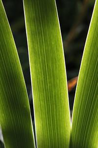 Light Green El Dorado County, CA