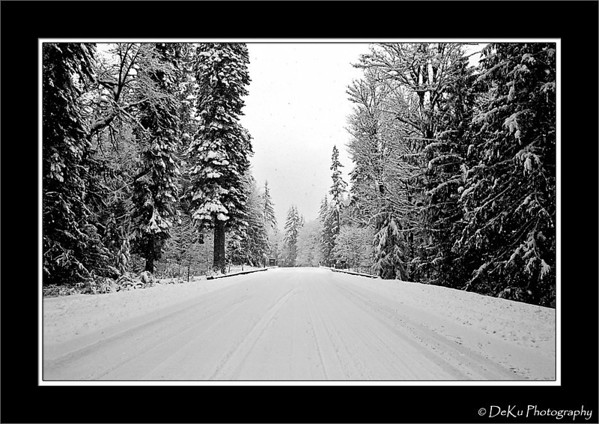 Snow covered road in the Olympic National Forest in Washington