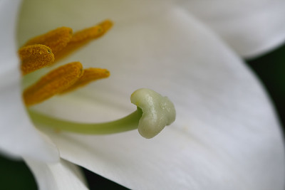 IMG#1720 In Memory of Mother-Madonna LIlly