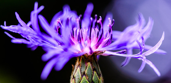 Can you name this flower?  Comment below if you can.