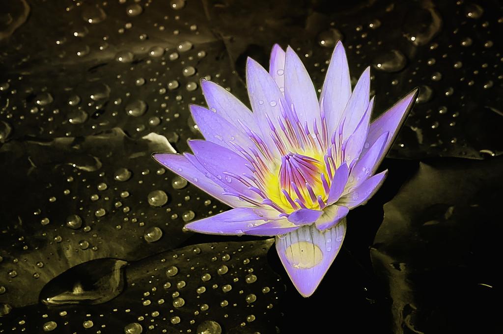 Purple on Purpose