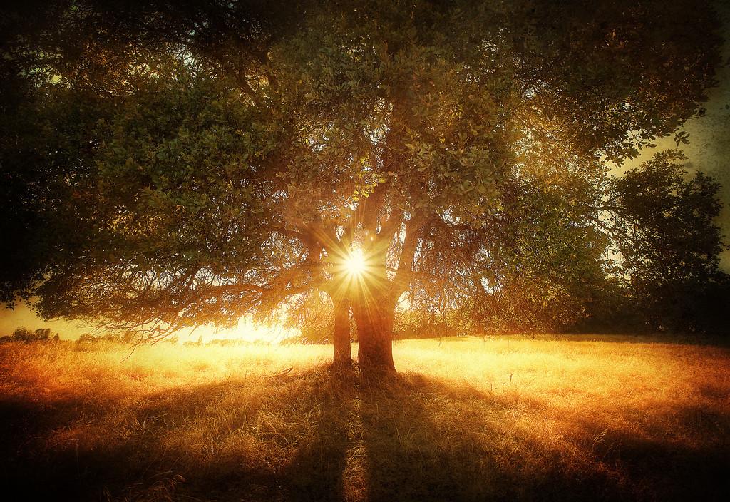 The Dreamin' Tree