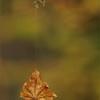 Hanging By A Leaf