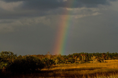 Beautiful rainbow on a walk from one of the parks just off the Everglades