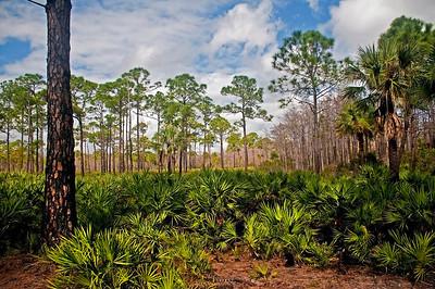 Undeveloped Florida
