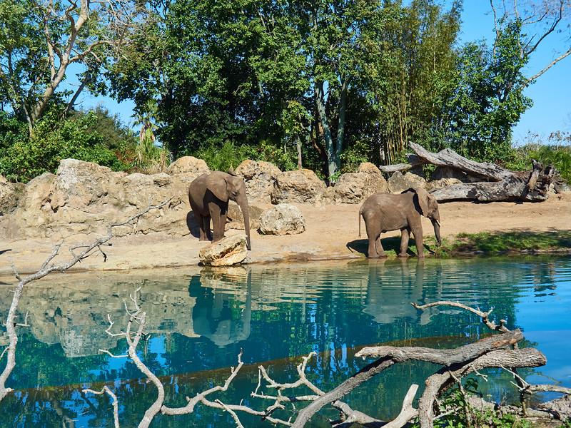 Kilimanjaro Safari, Disney World - Orlando, Florida
