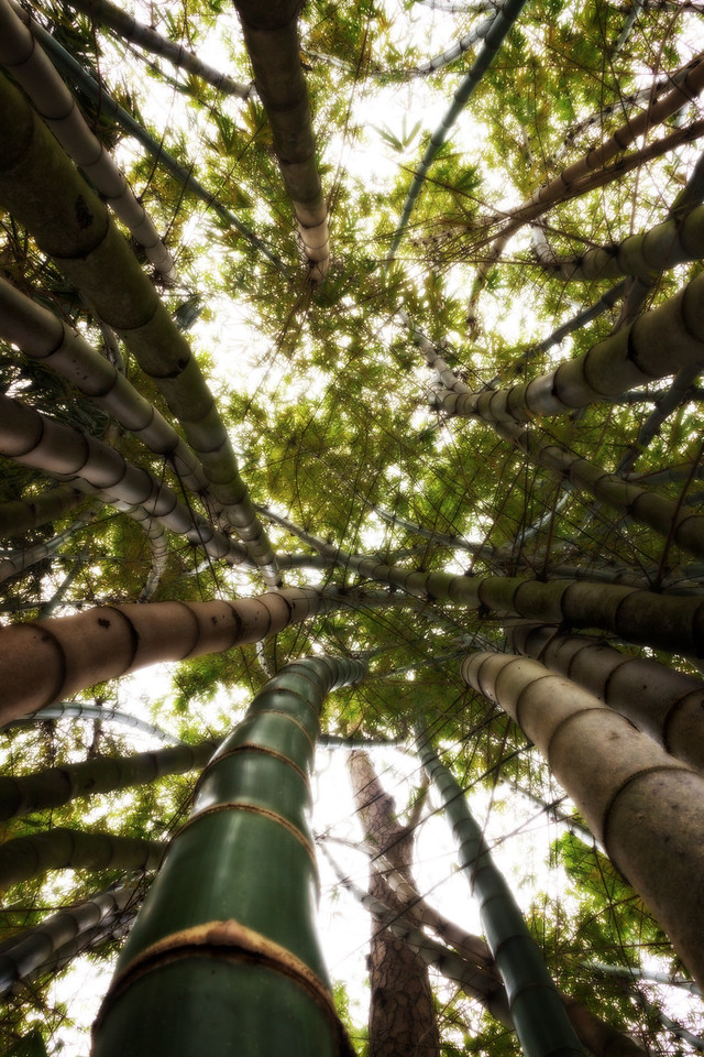 Bamboo Forest (Cape Coral, Florida)