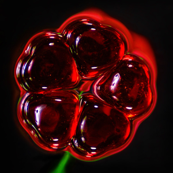 """PAD - April 8th, 2006<br /> """"Flower Candy""""<br /> If you look close you'll see a tulip reflection in the center."""