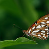 Butterfly, Zilker Botanical Gardens, Austin, TX