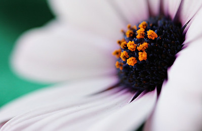 Flowers, Fine Art and Macro Portfolio