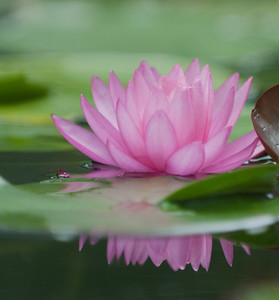 Water Lily -0105July 27, 2013