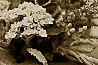 11/14/2010 ***Altar Flowers is Sepia*** I haven't posted in this gallery in a while because there hasn't been Altar flowers lately. The flowers today were absolutely beautiful, very vibrant. But I kind of like the way they look in sepia too.
