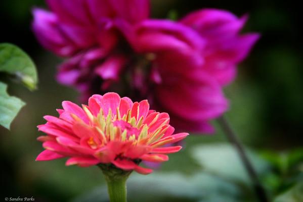 10-25-14: in the morning garden