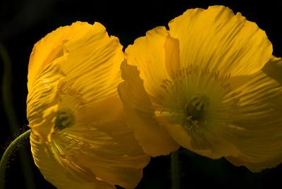 Flowers from Fort Mason Garden 078