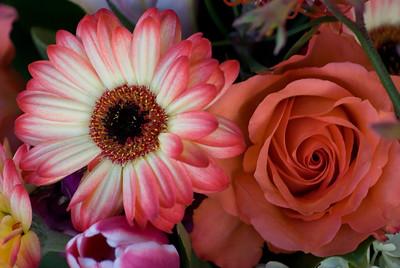 Flowers at Fort Mason Garden 089