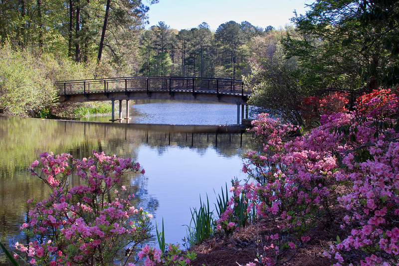 Azalea Bowl Lake and Bridge at Callaway Gardens in Pine Mountain, Georgia. Callaway Gardens, which is especially famous for its azaleas, boasts 13,000 acres of gardens and Georgia countryside, plus a conservation nature preserve, extensive education programs, and a very impressive resort as well.