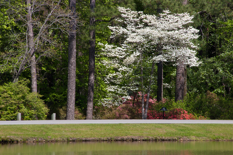 Flowering Dogwood trees reflecting in Mockingbird Lake at Callaway Gardens in Pine Mountain, Georgia. Callaway Gardens, which is especially famous for its azaleas, boasts 13,000 acres of gardens and Georgia countryside, plus a conservation nature preserve, extensive education programs, and a very impressive resort as well.