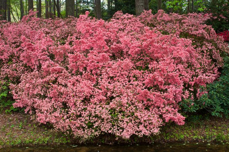 Azalea Overlook Garden At Callaway Gardens In Pine Mountain, Georgia. Callaway  Gardens, Which
