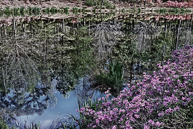Azalea Bowl with reflections at Callaway Gardens, Georgia, in April.
