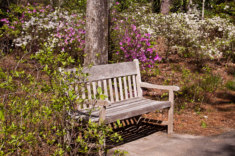 Garden Scene at Azalea Bowl in April at Callaway Gardens in Pine Mountain, Georgia. Callaway Gardens, which is especially famous for its azaleas, boasts 13,000 acres of gardens and Georgia countryside, plus a conservation nature preserve, extensive education programs, and a very impressive resort as well.