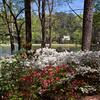 Garden scene with Dogwood Tree at Azalea Overlook Garden in early April at Callaway Gardens in Pine Mountain, Georgia. Callaway Gardens, which is especially famous for its azaleas, boasts 13,000 acres of gardens and Georgia countryside, plus a conservation nature preserve, extensive education programs, and a very impressive resort as well.