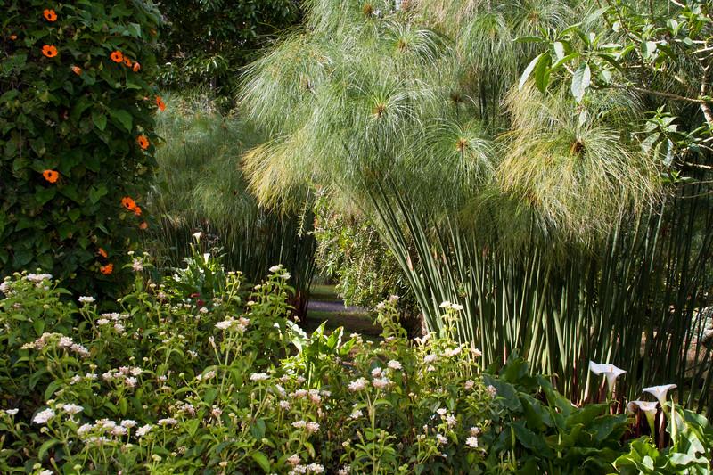 Tropical Garden Scene in the gardens of the Savegre Mountain Lodge in Costa Rica.