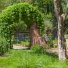 Ivy over entrance to garden path at Mercer Botanical Gardens.
