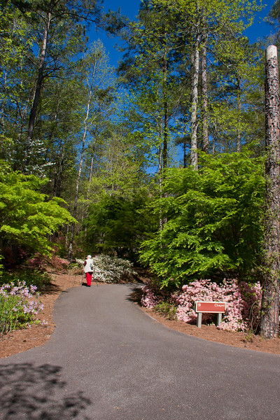 Photographer in Azalea Bowl Garden in early April at Callaway Gardens in Pine Mountain, Georgia. Callaway Gardens, which is especially famous for its azaleas, boasts 13,000 acres of gardens and Georgia countryside, plus a conservation nature preserve, extensive education programs, and a very impressive resort as well.