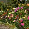 Garden scene in Butchart Gardens on Vancouver Island.