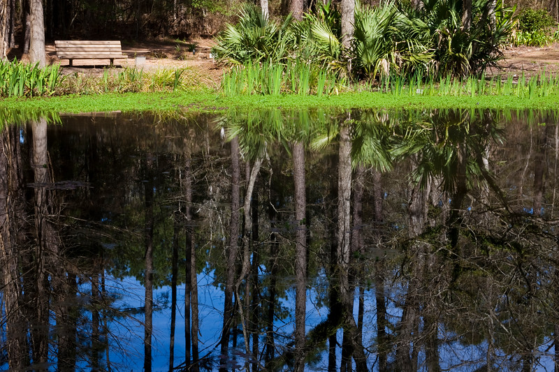 Reflections in pond at Mercer Arboretum and Botanical Gardens in Spring, Texas.