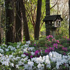 Bird House and Azaleas at Mercer Arboretum and Botanical Gardens in Spring, Texas.