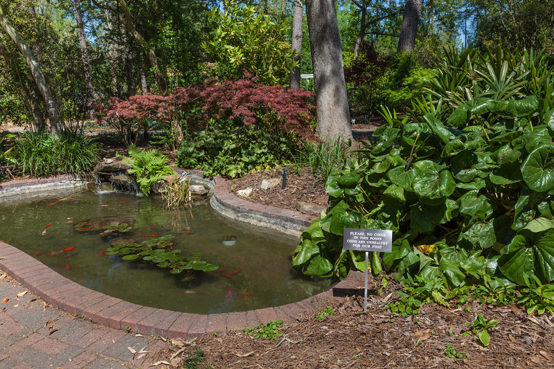 """Fish pond with """"no coins"""" sign at Mercer Botanical Gardens."""