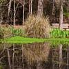 Pond at Mercer Arboretum and Botanical Gardens in Spring, Texas.