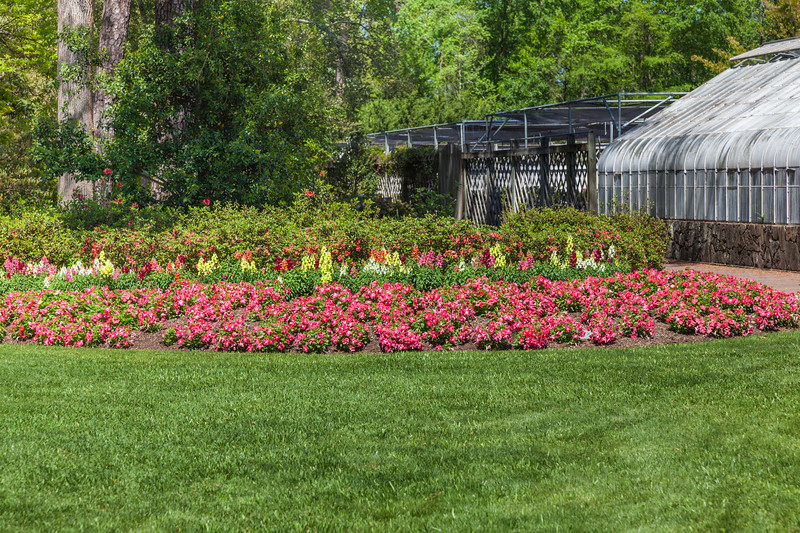 Garden scene with Petunias and Snapdragons by the Greenhouse in Mercer Botanical Gardens.