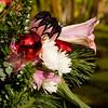 Christmas Flower Arrrangement at Mercer Arboretum and Botanical Gardens in Spring, Texas.