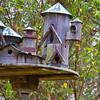 Bird House - shaped like castle, at Mercer Arboretum and Botanical Gardens in Spring, Texas.