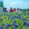 Beehler family enjoying field of bluebonnets and indian paintbrush wildflowers at Brenham, Texas.