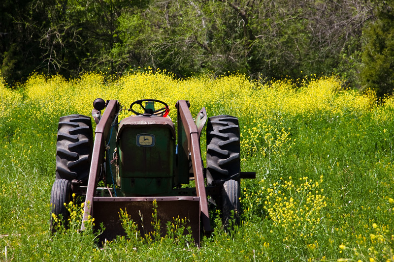 Old Tractor in a field of yellow wildflowers along Texas Farm-to-Market road 1155 near Washington-on-the-Brazos state park.